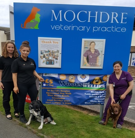 Step out for a Dog Walk in aid of Hospice