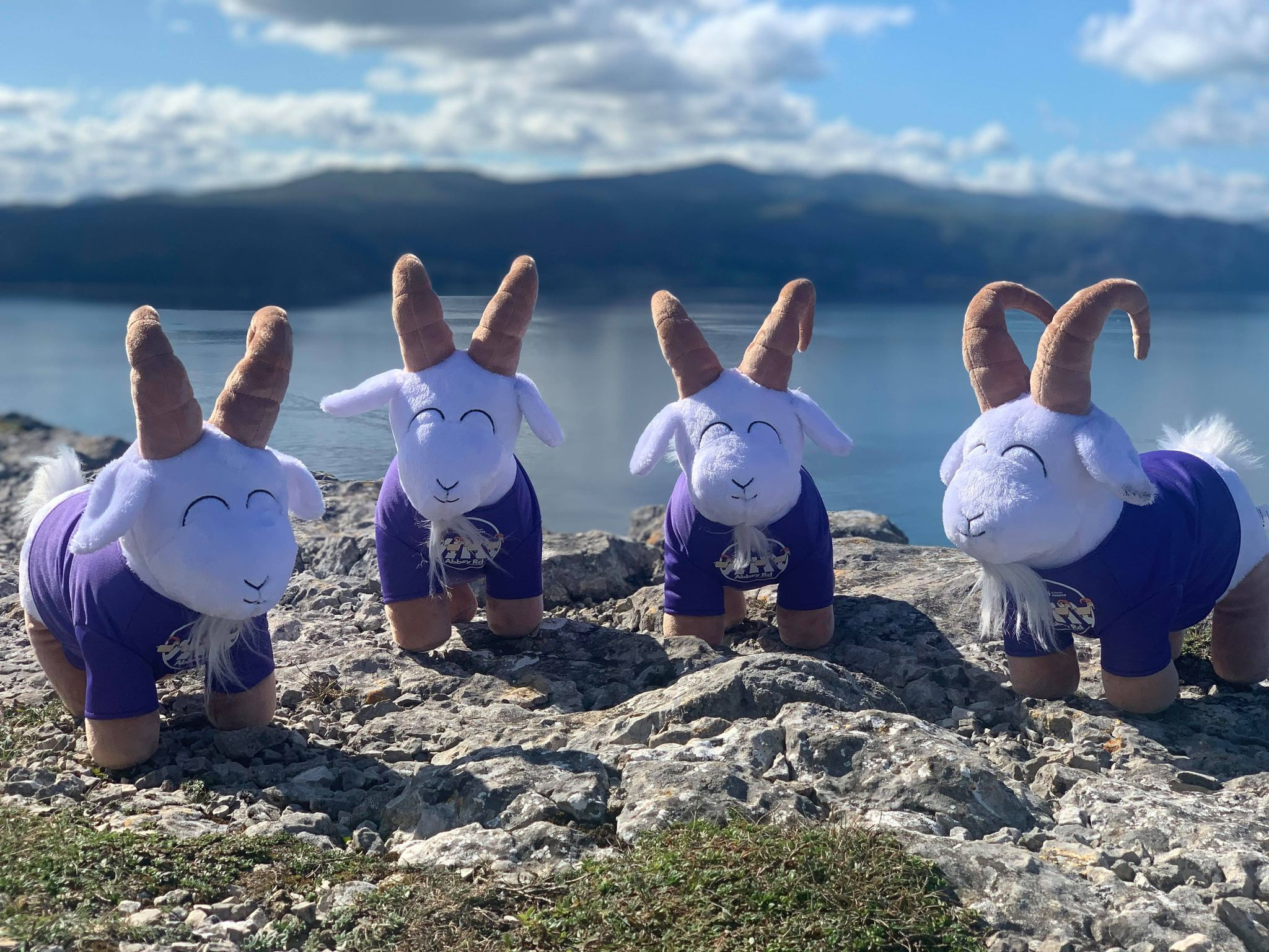 'Mostyn' the Great Orme Goat soft toy arrives in town!